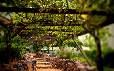 Rota do Vinho em São Roque